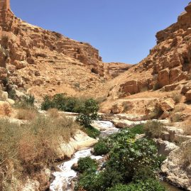Wyjazd KNDB Izrael 2014 - Dolina Cedronu, okolice klasztoru Mar Saba, Fot. © Dominika Tomaszewska